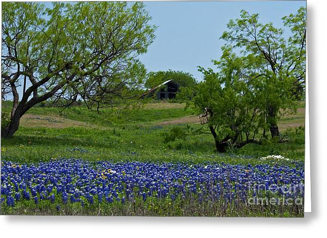 Bluebonnets And Old Barn Greeting Card by Lisa Holmgreen