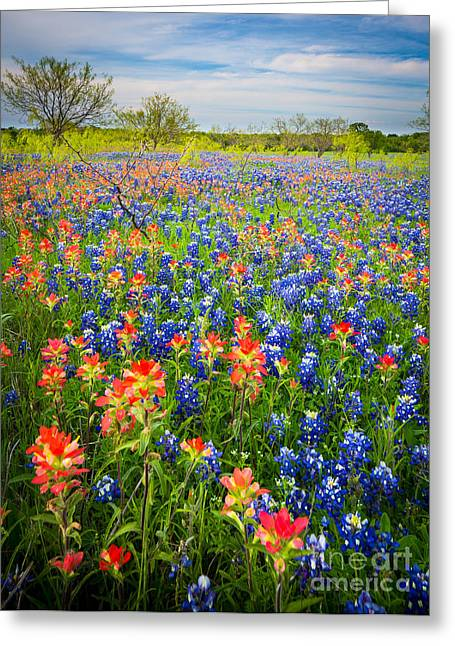 Bluebonnets And Prarie Fire Greeting Card