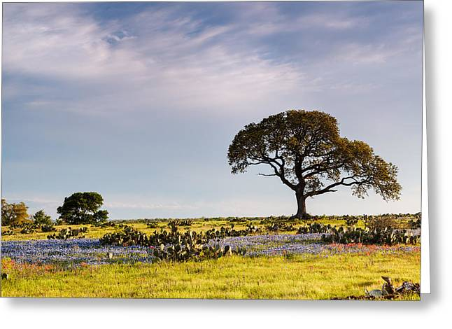 Bluebonnets And Prickly Pear Cacti - La Grange Texas Greeting Card