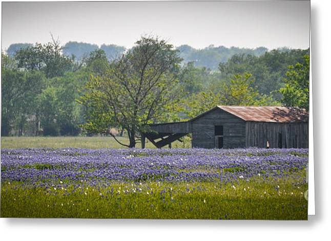 Bluebonnets By The Barn Greeting Card