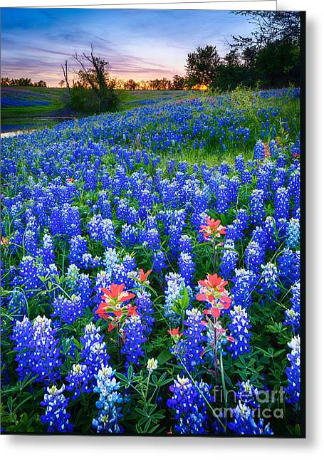 Bluebonnets Forever Greeting Card by Inge Johnsson