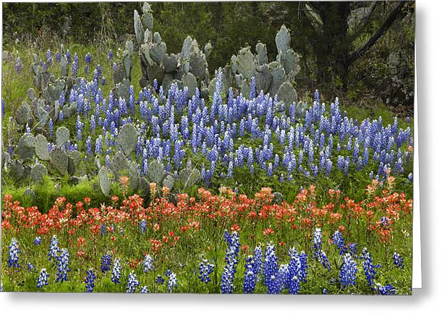 Bluebonnets Paintbrush And Prickly Pear Greeting Card