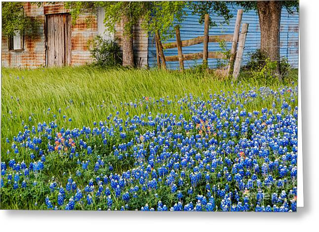 Bluebonnets Swaying Gently In The Wind - Brenham Texas Greeting Card