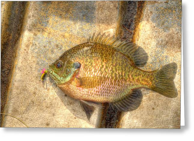 Bluegill In Hdr Greeting Card by Thomas Young