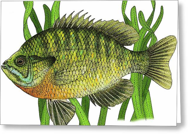 Bluegill Greeting Card by Roger Hall