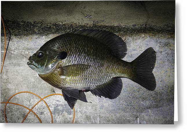 Bluegill Greeting Card by Thomas Young