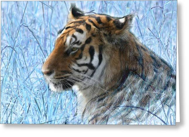 Bluegrass Tiger Greeting Card