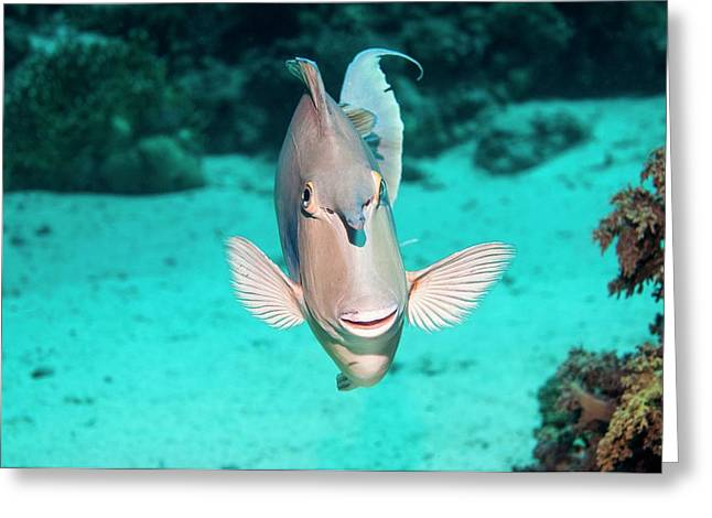 Bluespine Unicornfish By A Reef Greeting Card