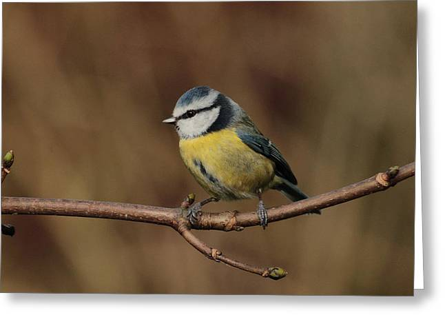 Bluey Greeting Card by Peter Skelton