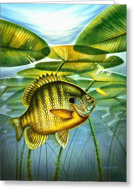 Blugill And Lilypads Greeting Card by Jon Q Wright