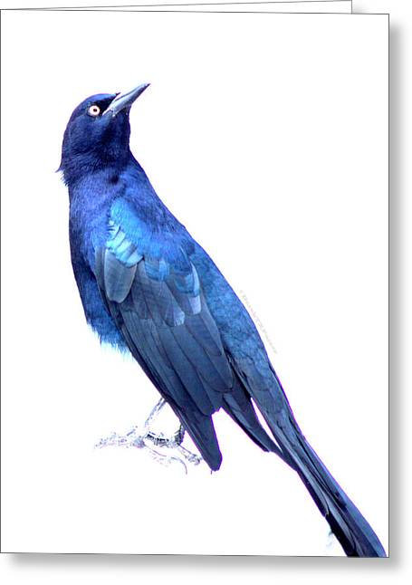 Bluish Bird Greeting Card by DerekTXFactor Creative