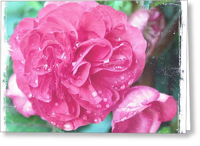Blush Of Spring II Greeting Card