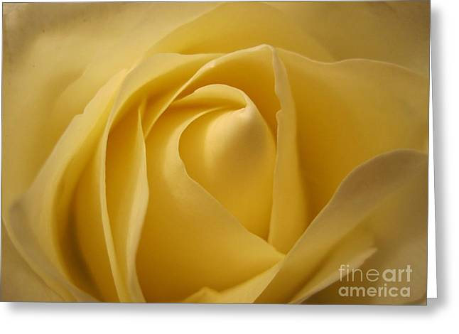 Blushing Cream Rose  Greeting Card