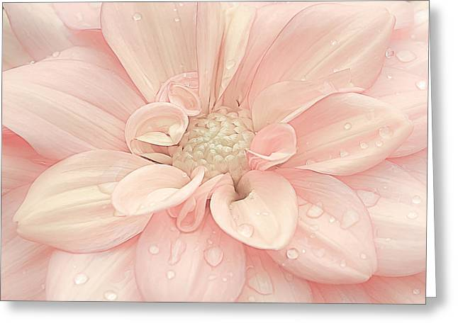 Blushing Dahlia Greeting Card