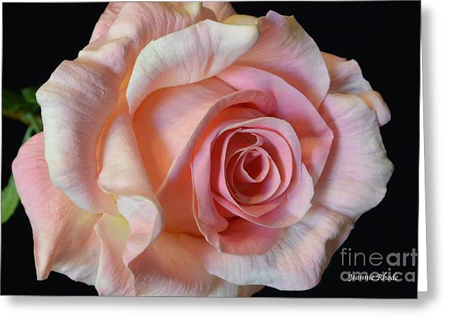 Greeting Card featuring the photograph Blushing Pink Rose by Jeannie Rhode