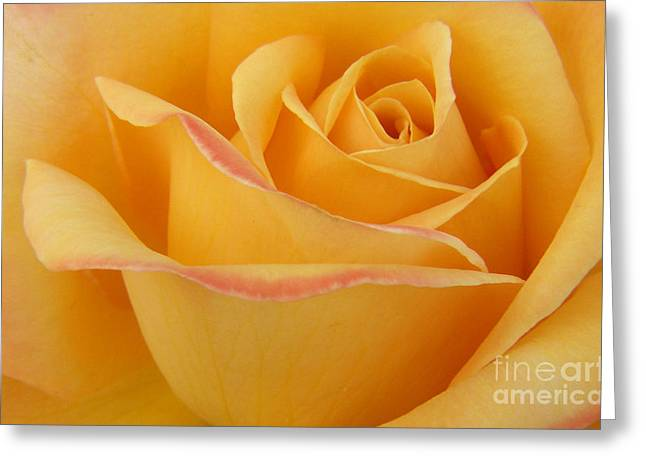 Blushing Yellow Rose Greeting Card