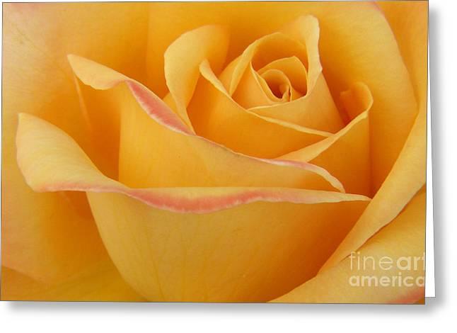 Blushing Yellow Rose Greeting Card