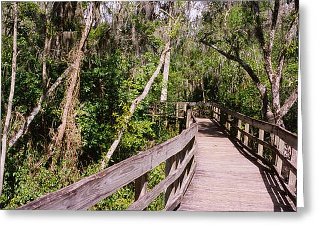 Boardwalk Passing Through A Forest Greeting Card