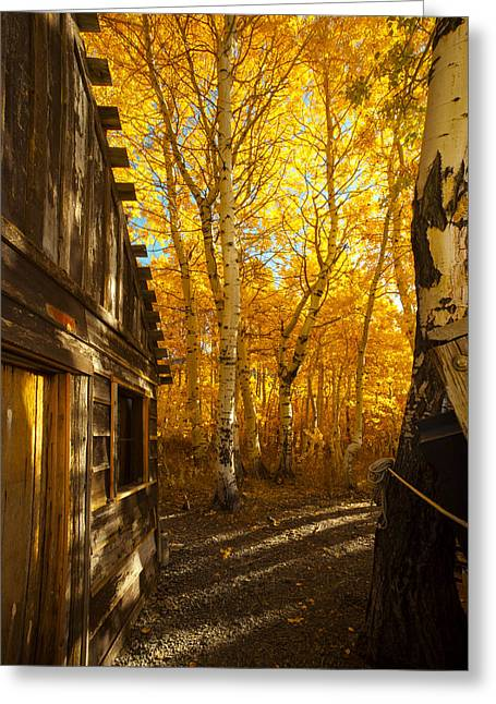 Boat House Among The Autumn Leaves  Greeting Card