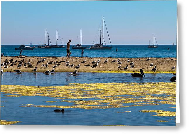 Boats And Birds Greeting Card by Bernard  Barcos