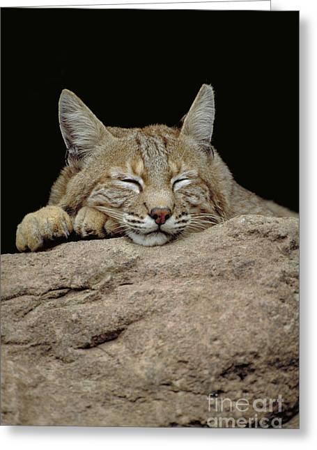 Bobcat, Arizona Greeting Card by Art Wolfe