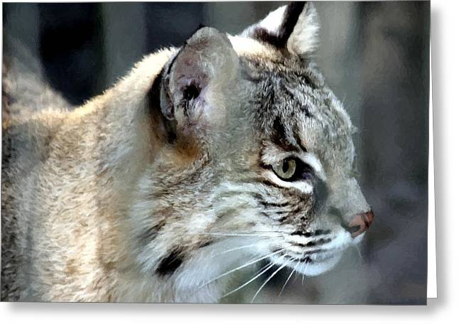 Bobcat Greeting Card by Barry Spears