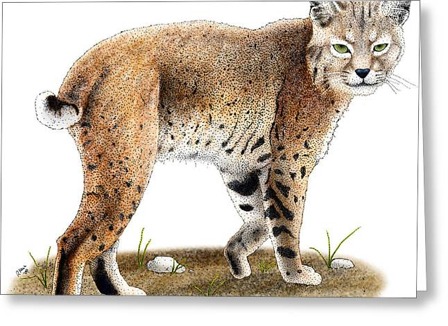 Bobcat Greeting Card by Roger Hall