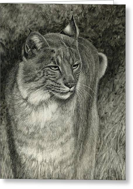 Greeting Card featuring the drawing Bobcat Emerging by Sandra LaFaut