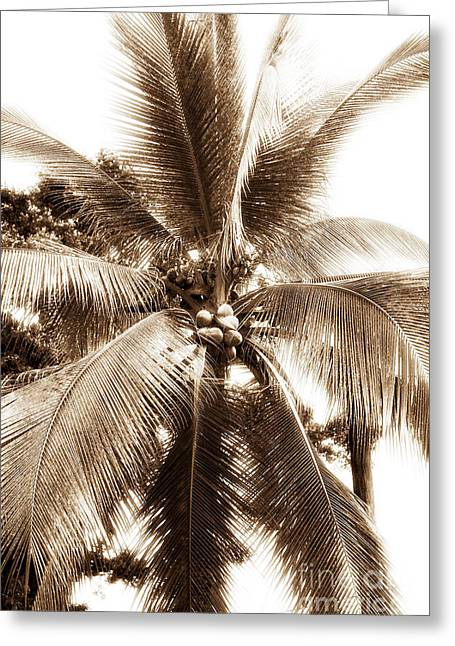 Bocas Palm Greeting Card by John Rizzuto