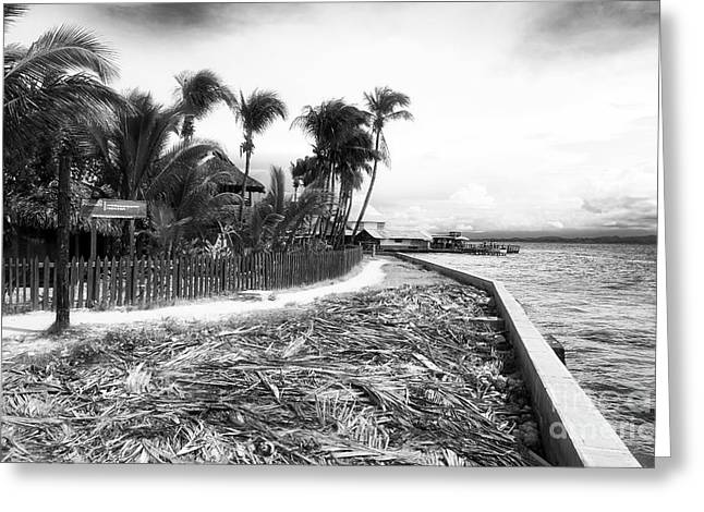 Bocas Path Greeting Card by John Rizzuto
