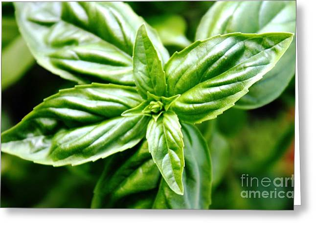 Bodacious Basil Greeting Card by French Toast