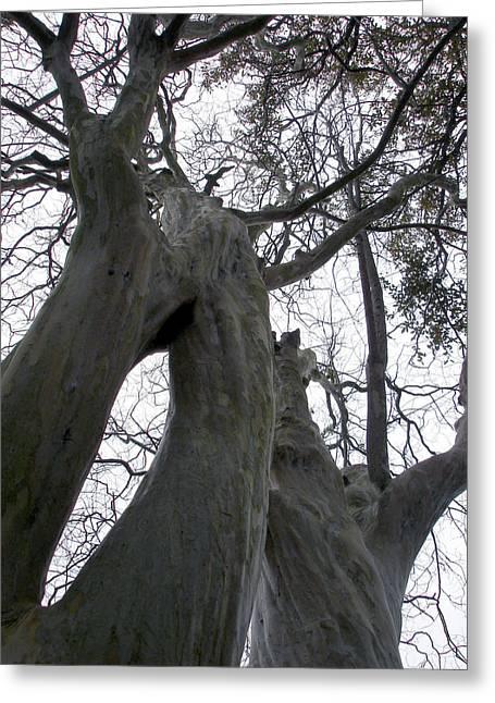 Body Tree Greeting Card by Michel Mata