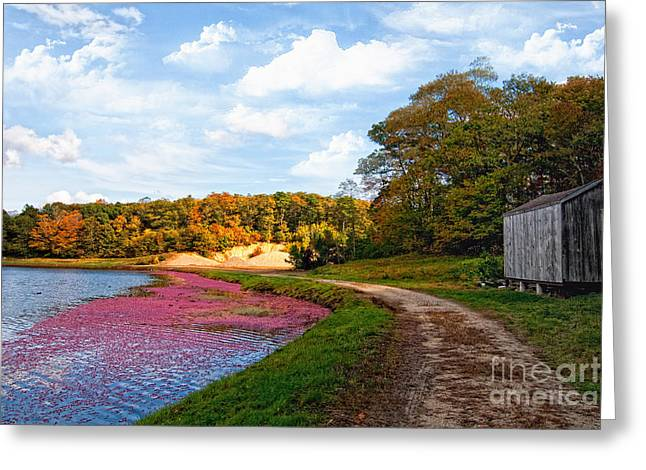 Greeting Card featuring the photograph Bog by Gina Cormier