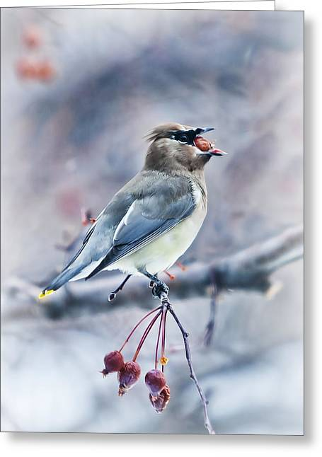 Bohemian Waxwing Greeting Card by Jana Thompson