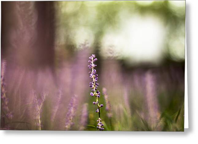 Bokeh With Purple Wildflower Greeting Card