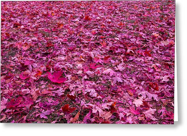 Pink Leaves Greeting Card by Abdullah Alnassrallah