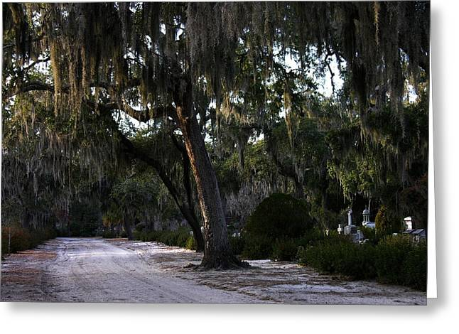 Bonaventure Cemetery - Live Oak Trees Greeting Card by Jacqueline M Lewis