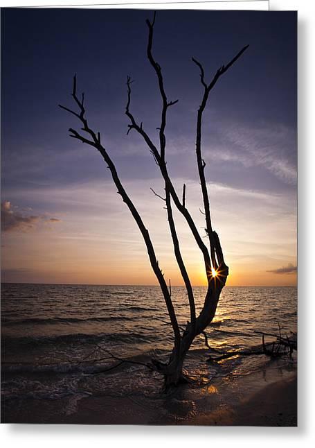 Bonita Beach Tree Greeting Card by Bradley R Youngberg