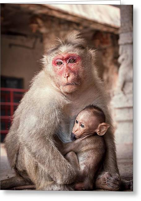 Bonnet Macaque And Baby Greeting Card