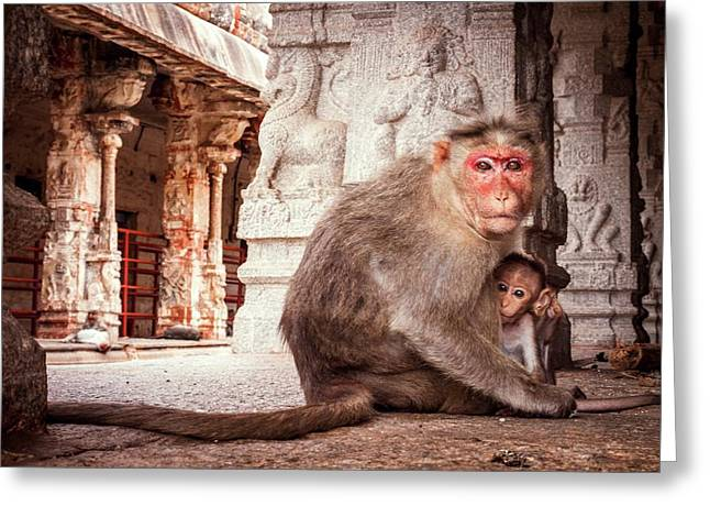 Bonnet Macaque And Young Greeting Card