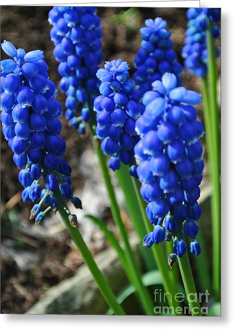 Bonny Blue Greeting Card