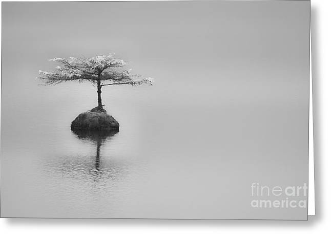 Bonsai At Fairy Lake Greeting Card