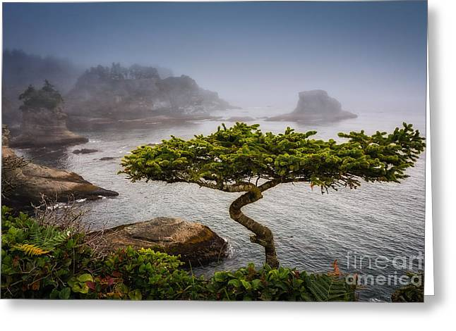 Bonsai Greeting Card by Carrie Cole