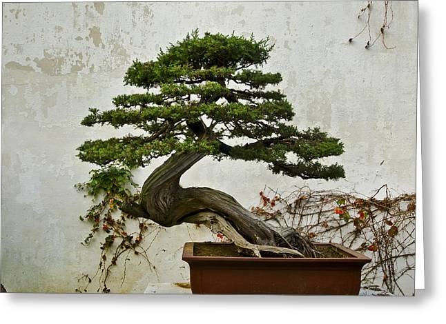 Bonsai Suzhou China Greeting Card