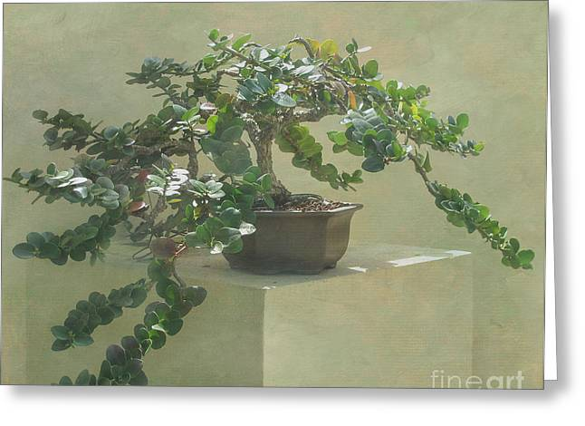Bonsai Tree Greeting Card