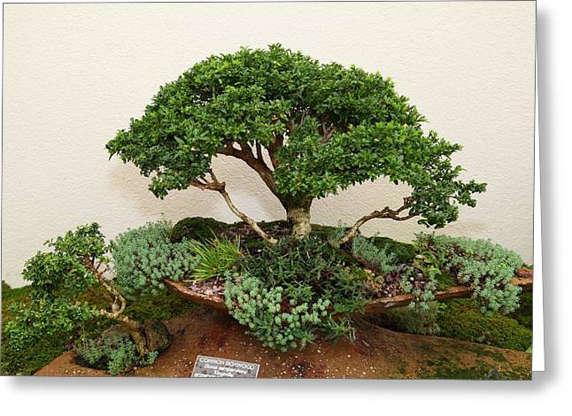 Bonsai Treet - Us Botanic Garden - 01131 Greeting Card by DC Photographer
