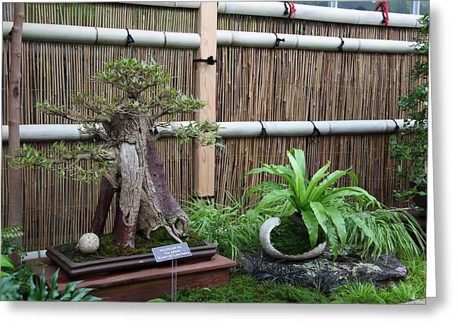 Bonsai Treet - Us Botanic Garden - 01133 Greeting Card
