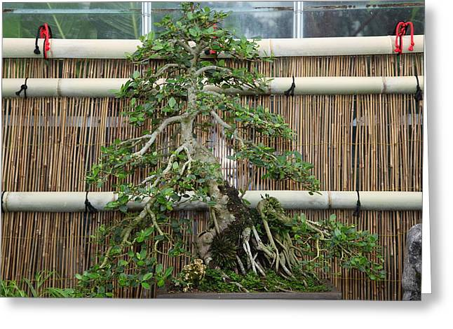 Bonsai Treet - Us Botanic Garden - 01135 Greeting Card by DC Photographer