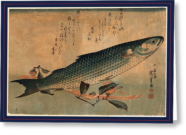 Bora Zu, Striped Mullet Bora. Between 1833 And 1836 Greeting Card