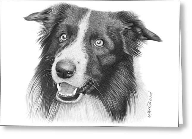 Border Collie -030 Greeting Card